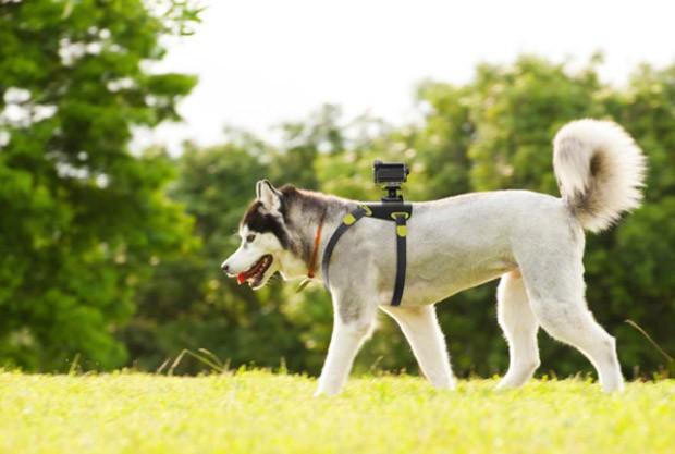 actualidad animales curiosidades japon ocio sociedad tecnologia video  Lo último en Japón, vídeo cámaras para perros