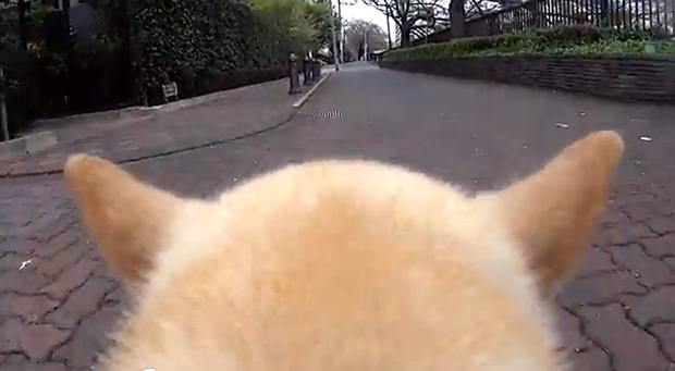Lo último en Japón, vídeo cámaras para perros