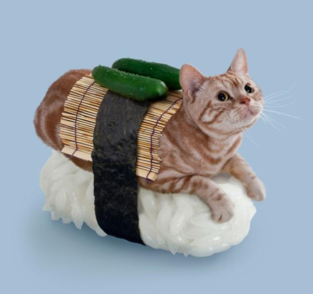 actualidad animales curiosidades japon kawaii ocio sociedad video  Llegan los Sushi Gatos