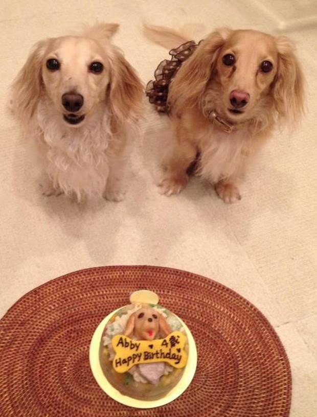 actualidad curiosidades japon kawaii negocios ocio sociedad  Nueva moda en Japón: Tartas personalizadas para perros