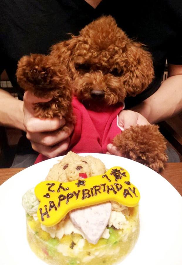 Nueva moda en Japón: Tartas personalizadas para perros