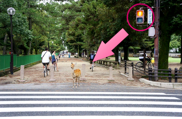 Los ciervos de Nara no cruzan en rojo