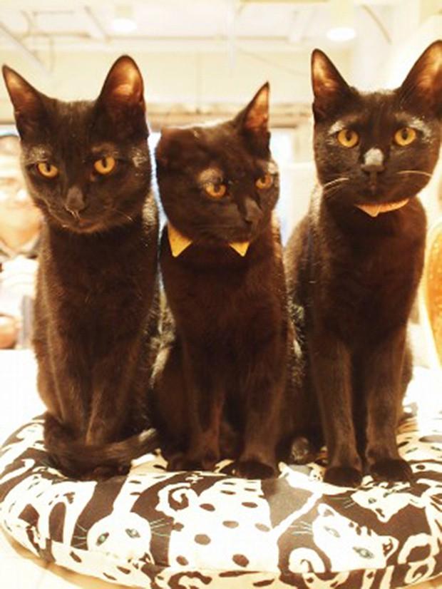 Una cafetería de gatos negros
