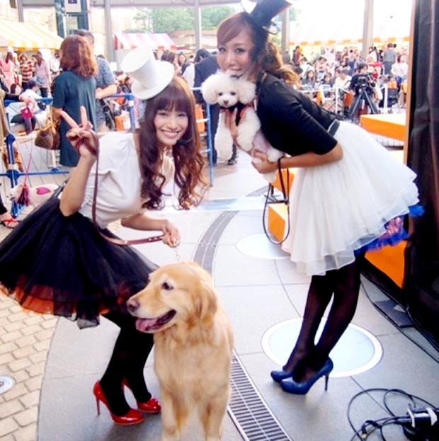 Fiesta Hallowen para mascotas en Roppongi Hills