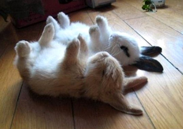 Lo último en Japón: Fotografiar conejos durmiendo