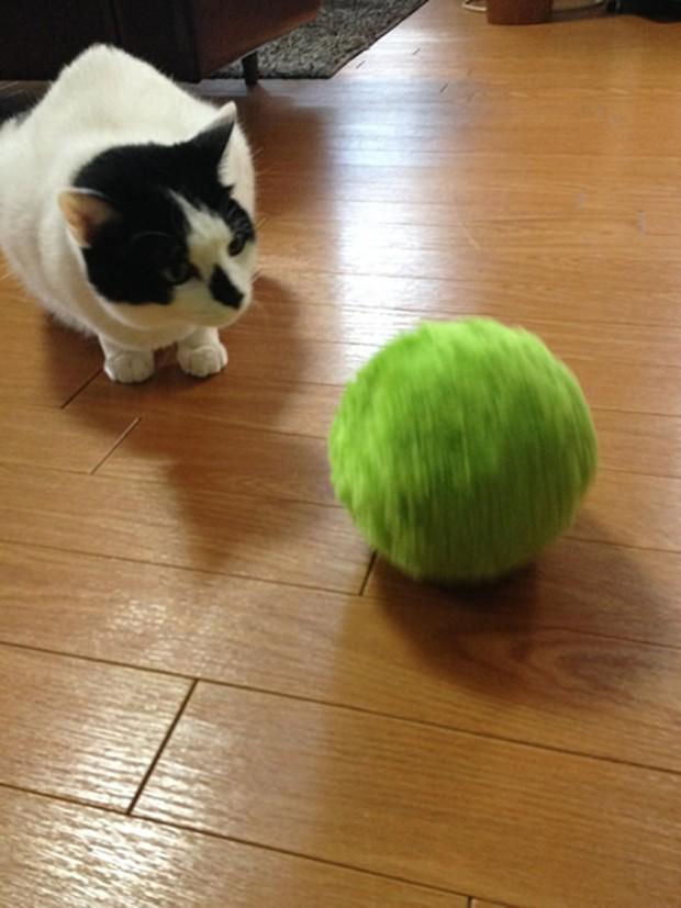 """actualidad animales curiosidades japon kawaii negocios sociedad tecnologia video  """"Mocoro"""", el aspirador robótico amigo de las mascotas"""