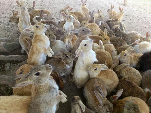 animales curiosidades japon kawaii ocio sociedad turismo video  Okunoshima, la Isla de los Conejos...Cientos de conejos!