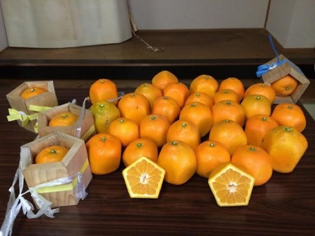 actualidad comida curiosidades japon negocios sociedad  Naranjas pentagonales