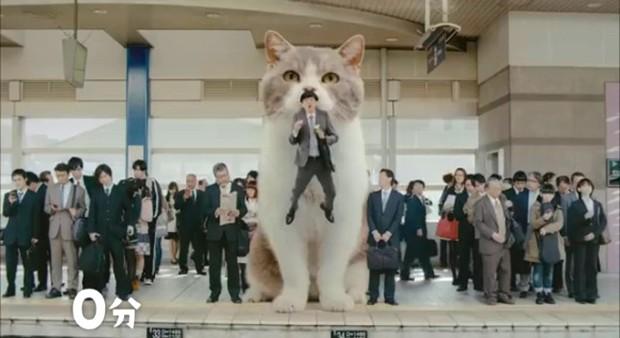 actualidad animales comida curiosidades japon kawaii publicidad sociedad video  El anuncio japonés del momento, está protagonizado por un adorable gato gigante
