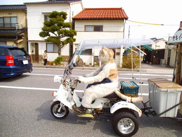 animales comida curiosidades japon kawaii negocios sociedad tradiciones video  Mikeneko, el Gato que vende boniatos asados