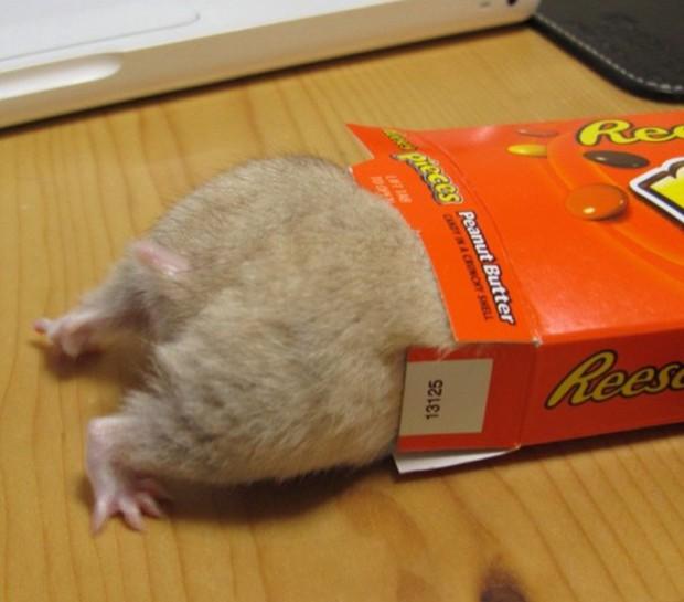 La nueva pasión de los japoneses: Fotografiar el trasero de sus Hamsters