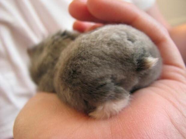 actualidad animales curiosidades kawaii ocio sociedad  La nueva pasión de los japoneses: Fotografiar el trasero de sus Hamsters