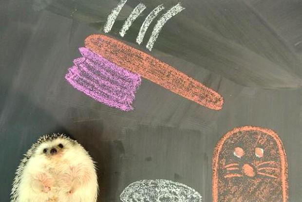 actualidad animales curiosidades kawaii ocio sociedad  Marutaro, el erizo japonés más famoso del mundo