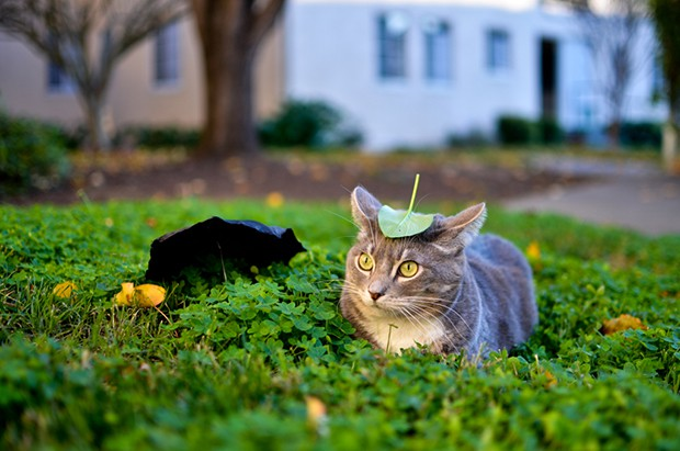 """anime curiosidades japon kawaii manga sociedad  """"Nekobasu"""", el """"Gato Bus"""" de Totoro...Visto en un jardín!!"""