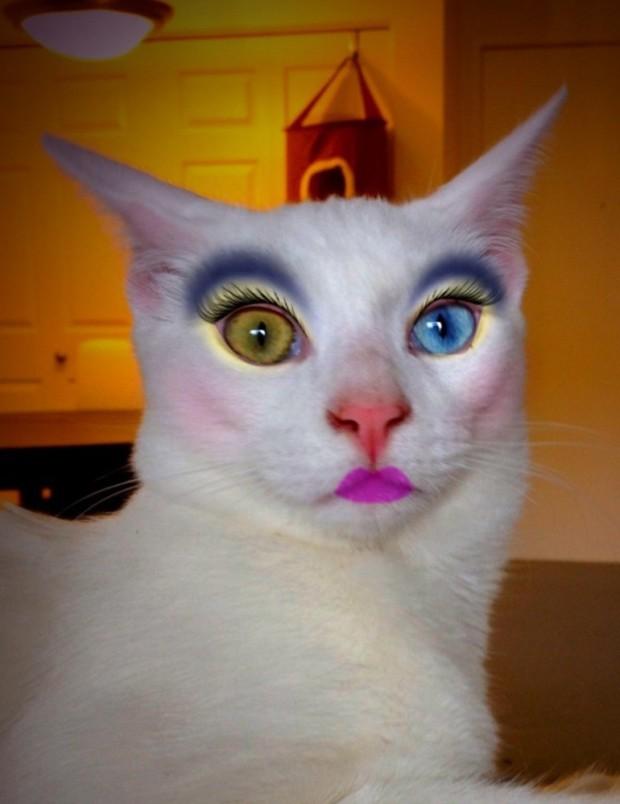 Maquillando perros y gatos