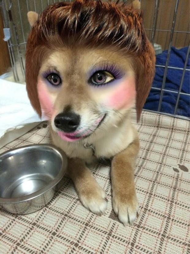 animales curiosidades japon kawaii ocio sociedad  Maquillando perros y gatos