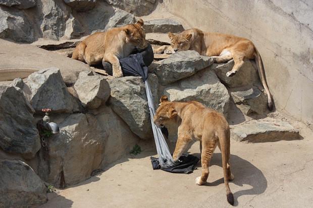 """Jeans """"diseñados"""" por los animales del Zoo"""