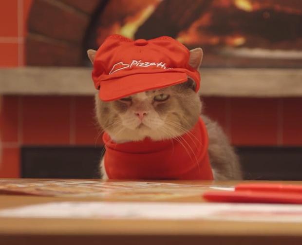 """Los nuevos empleados felinos de """"Pizza Hut"""" Japón (Vídeos)"""