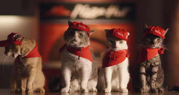 """animales comida japon kawaii negocios noticias ocio sociedad spots tv video  Los nuevos empleados felinos de """"Pizza Hut"""" Japón (Vídeos)"""