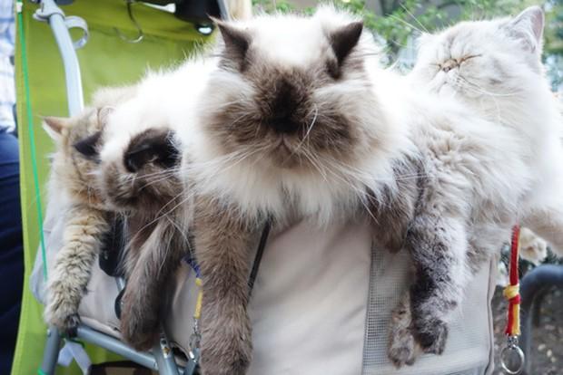"""actualidad animales curiosidades japon kawaii ocio sociedad tokyo  El """"Hombre Gato"""" de Tokyo"""