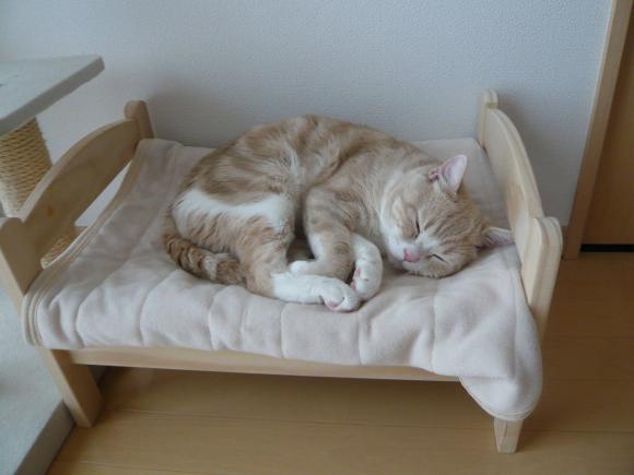 Las camas para gatos de IKEA Japan