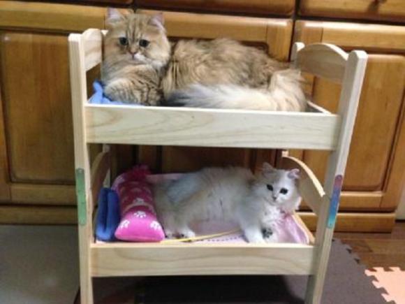 actualidad animales curiosidades japon kawaii negocios sociedad  Las camas para gatos de IKEA Japan