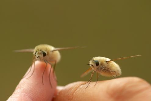 """El insecto más """"Kawaii"""" del mundo"""