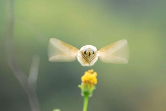 """animales curiosidades japon  El insecto más """"Kawaii"""" del mundo"""
