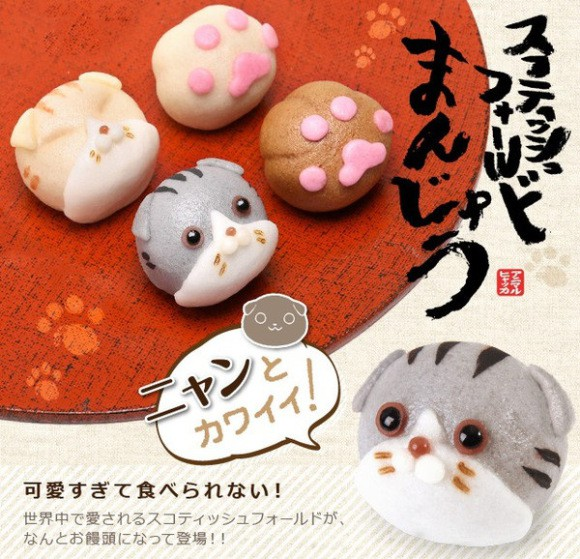 Scottish Fold Manju demasiado Kawaii para comérselo!