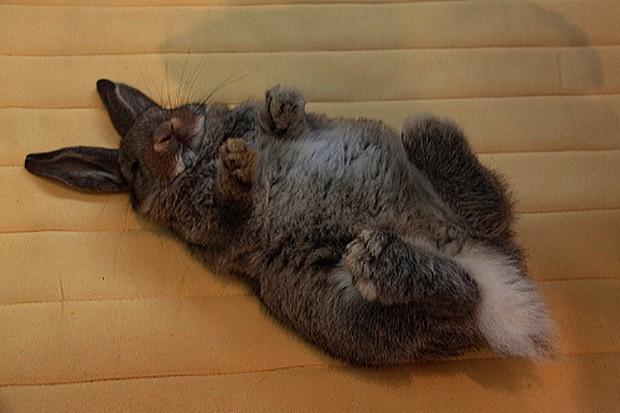 actualidad animales  Lo último en Japón: Fotografiar conejos durmiendo