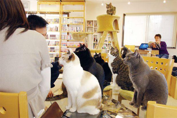 animales curiosidades japon  Los japoneses y los nekos