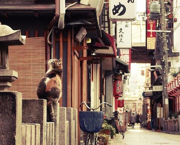 Los japoneses y los nekos