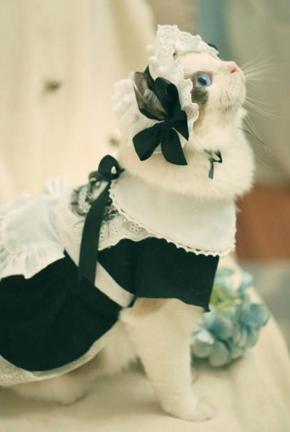 curiosidades japon kawaii  Cosplay Cats! ?