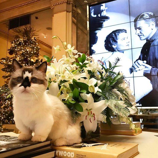 animales curiosidades kawaii  ¡Conoce a Albert el 🐱 más famoso!