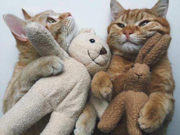 animales curiosidades internet  💖🐱 El San Valentin de los nekos!