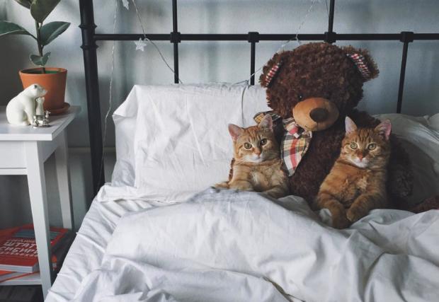 animales curiosidades internet  ?? El San Valentin de los nekos!