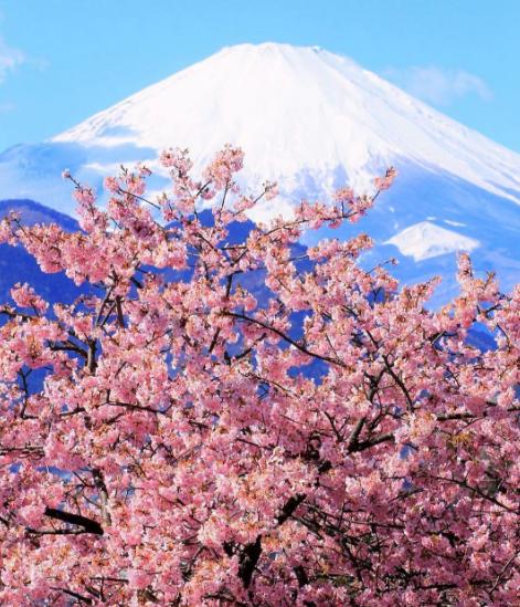 actualidad Combini Lovers curiosidades japon japonshop  Hanami temprano con Japonshop