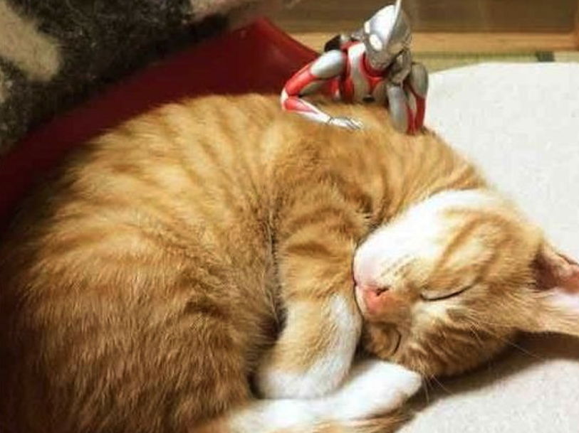Gato y Ultraman y cosas de nekos geniales!