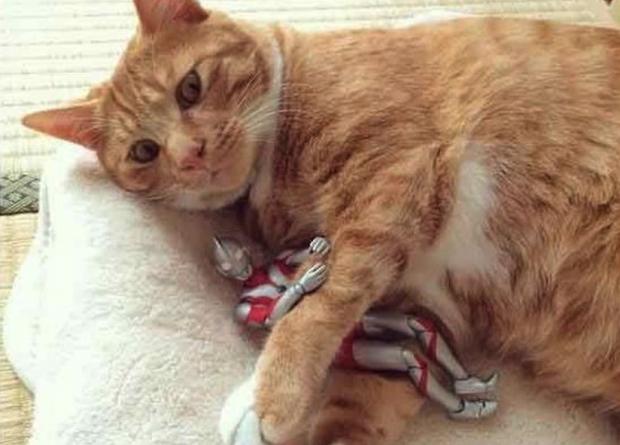 curiosidades internet japon japonshop  Gato y Ultraman y cosas de nekos geniales!