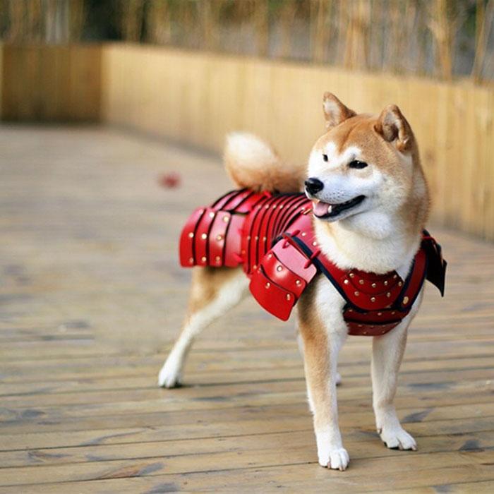 Samurái - armaduras para nekos e inus (perros y gatos)
