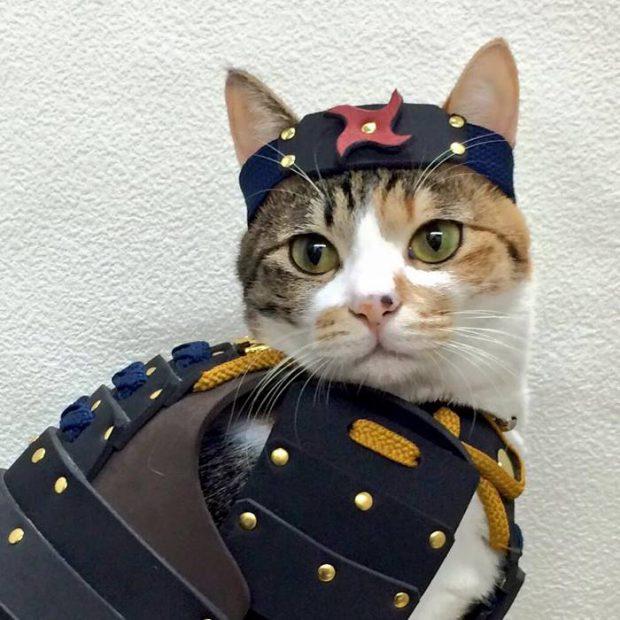 animales curiosidades japon japonshop  Samurái - armaduras para nekos e inus (perros y gatos)