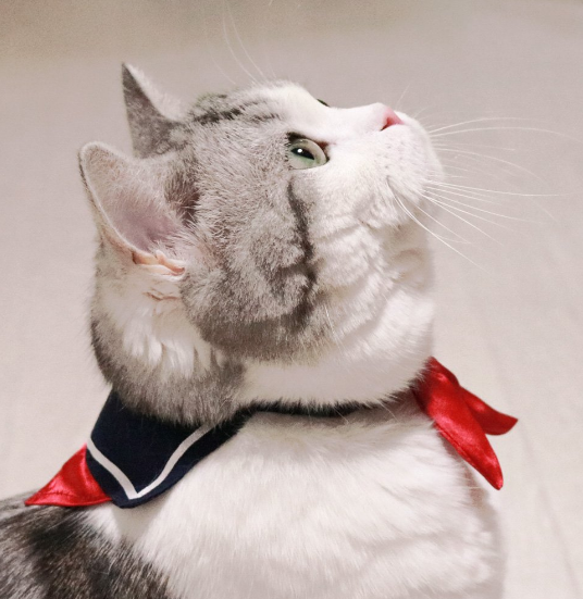 Nekos Collares Sailor Suit Fashion en Japón