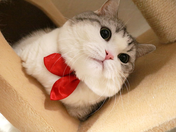 actualidad curiosidades japon  Nekos Collares Sailor Suit Fashion en Japón