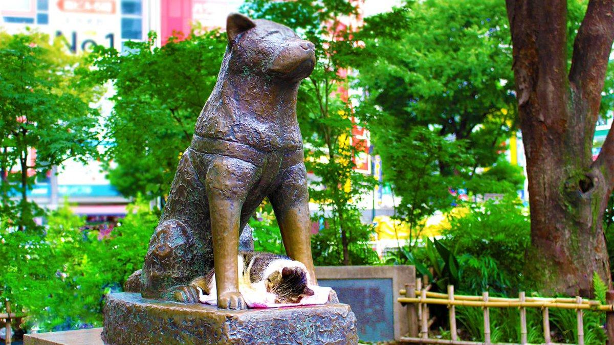 Hachiko Japonshop
