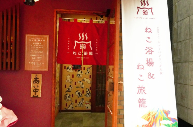 animales japon  Ryokan neko cafe Tokyo mola mucho!