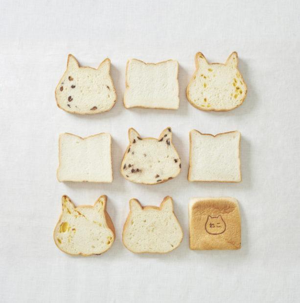 Sin categoría  Pan y saliva de gato ¿Qué está pasando en Japón?