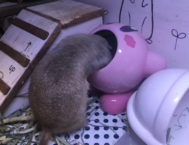 japon  PlayfulKirby la colección que llega para tus regalos de estas Navidades! y EXTRA