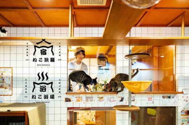 Pasando el finde en el Neko cafe-hotel Neko Yokujo y Neko Hatago