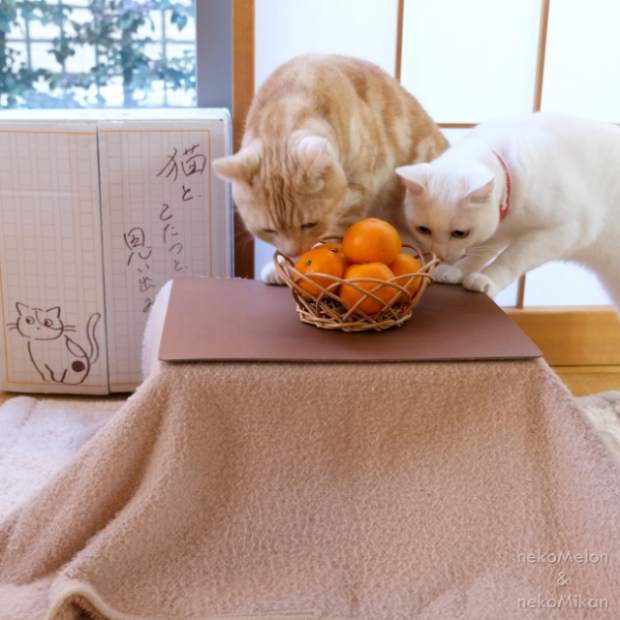 actualidad curiosidades japon  Neko Kotatsus para gatetes en invierno!! Nyan sugoi nyan nyan!