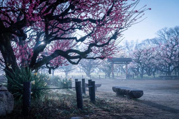 japon  Un paseo de invierno por Kyoto nevado y un poco de Hanami con nieve!